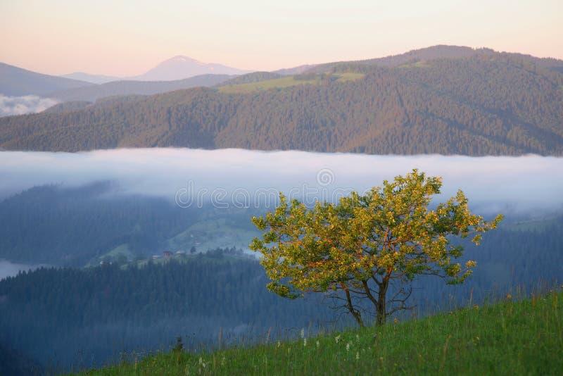 Gele boom in berg stock afbeelding