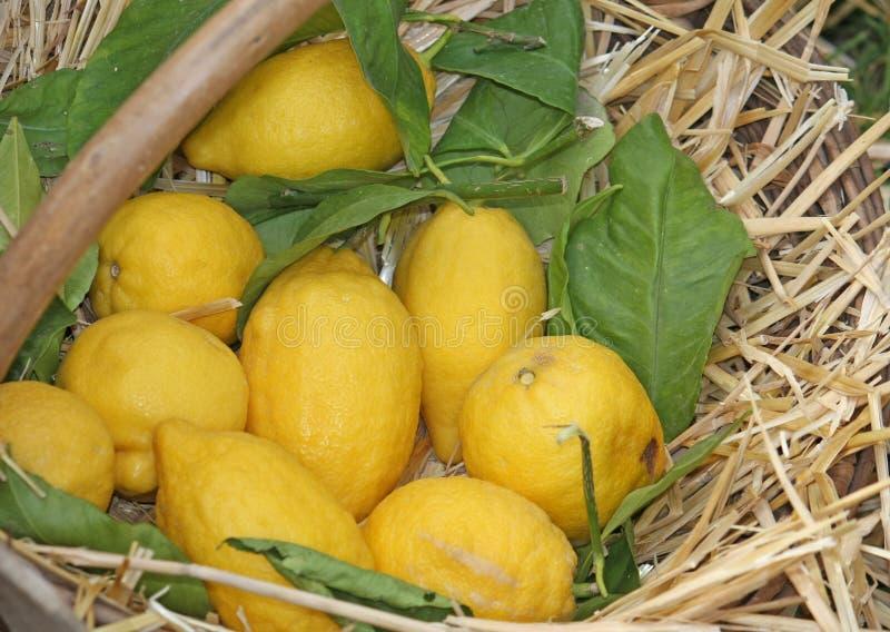 Gele citroenen royalty-vrije stock fotografie