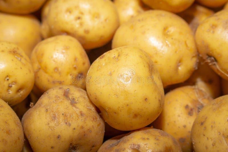 Gele creoolse aardappel voor verkoop royalty-vrije stock afbeelding