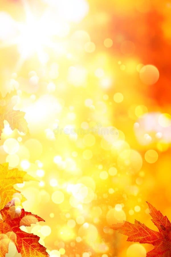 Gele de bladerenachtergrond van de herfst royalty-vrije stock afbeelding