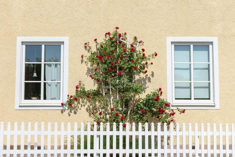 Gele de bouwmuur met struik van rode rozen en een witte geplukte omheining royalty-vrije stock afbeeldingen