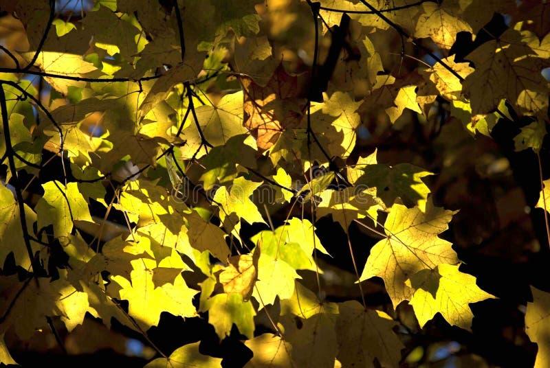Gele de herfstbladeren royalty-vrije stock fotografie