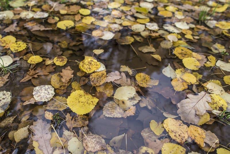Gele de herfstbladeren in een regenvulklei royalty-vrije stock foto