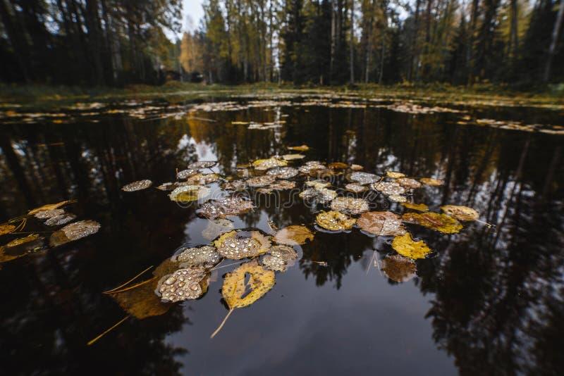 Gele de herfstbladeren op het water van bosmeer royalty-vrije stock afbeeldingen