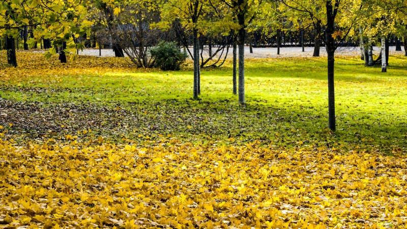 Gele de herfstbladeren in park stock fotografie