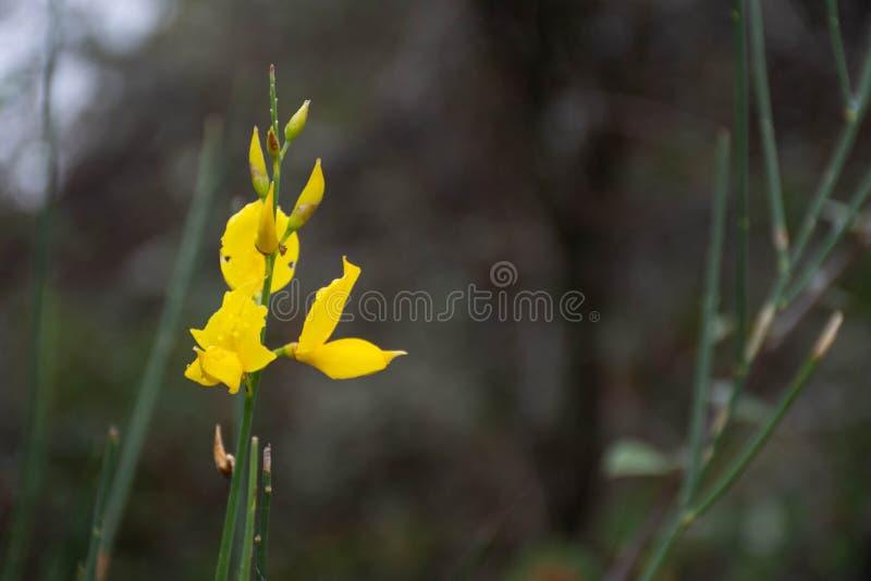Gele de herfstbloemen stock foto's
