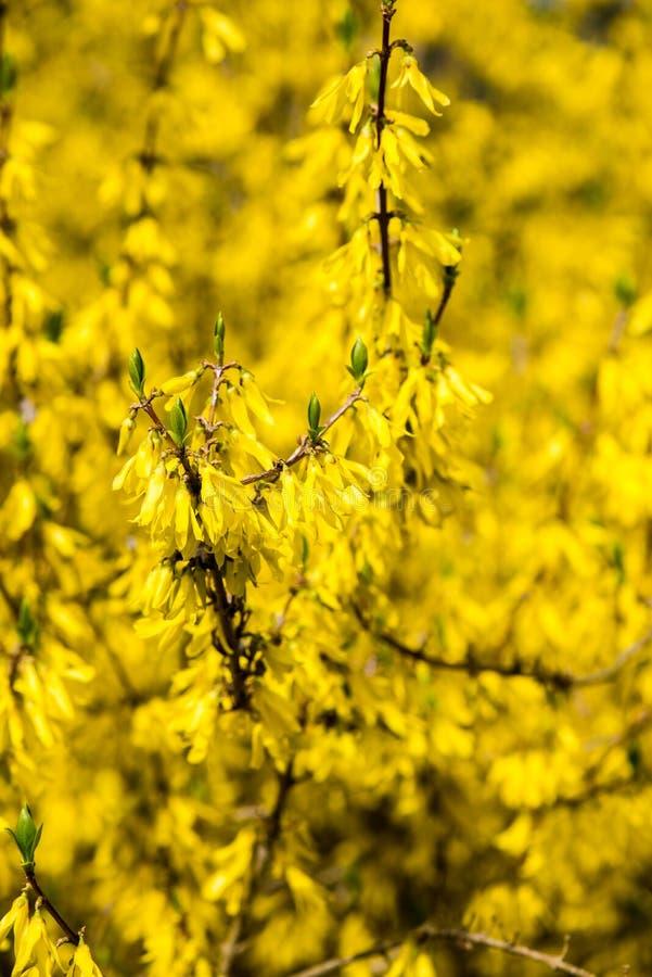 Download Gele De Lentebloemen Op Groen Stock Afbeelding - Afbeelding bestaande uit serene, spring: 54077829