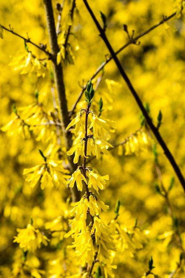 Download Gele De Lentebloemen Op Groen Stock Foto - Afbeelding bestaande uit omheining, spring: 54077858
