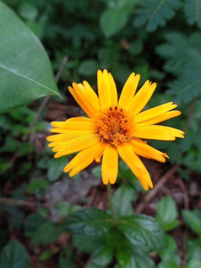 Gele in de schaduw gestelde bloem stock afbeeldingen