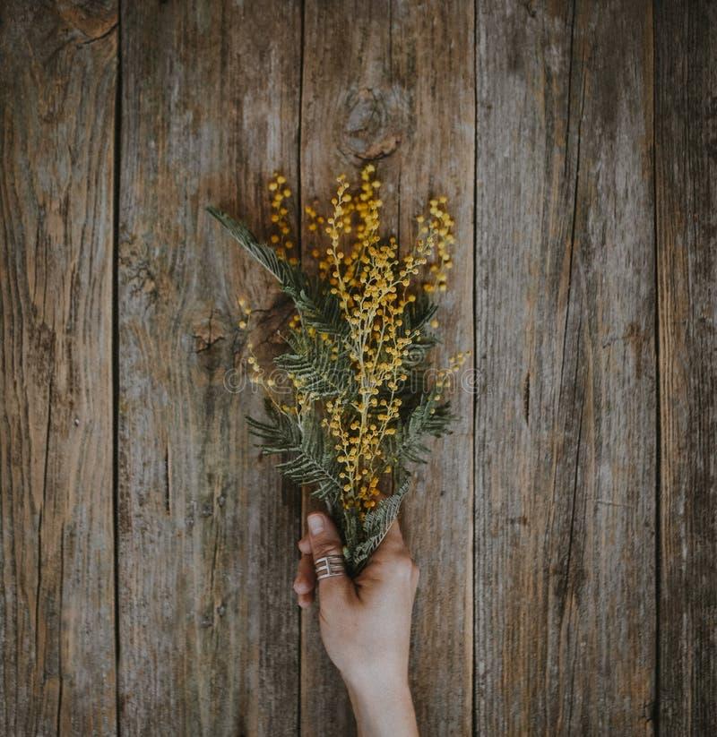 Gele de tak houten achtergrond van de bloemmimosa royalty-vrije stock foto