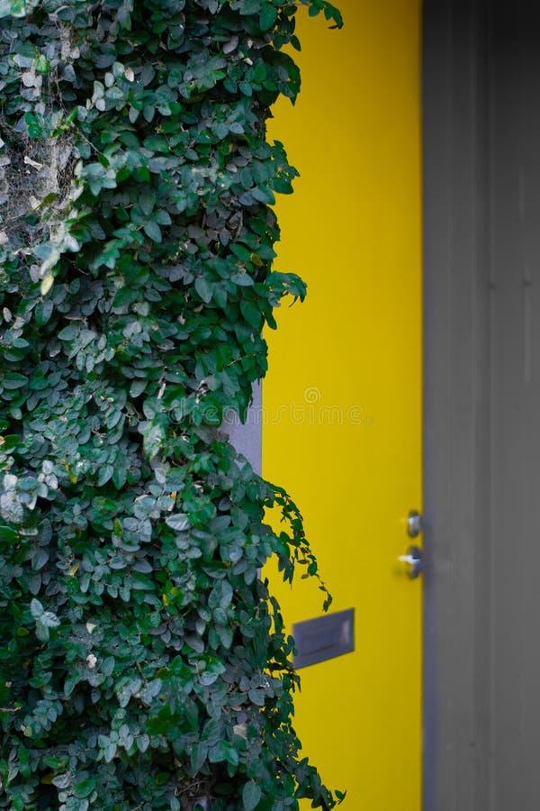 Gele deur en klimopstruik royalty-vrije stock afbeelding