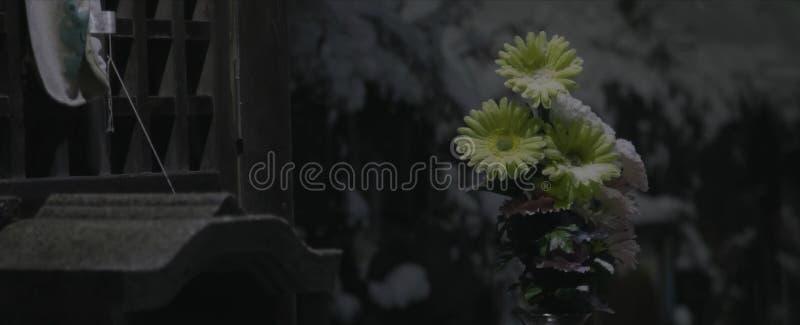 Gele die bloemen met sneeuw in de schemering worden bestrooid royalty-vrije stock afbeeldingen