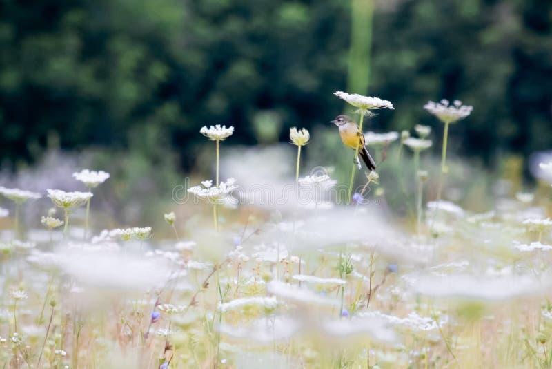 Gele die vogel op een bloem wordt gezeten stock foto's