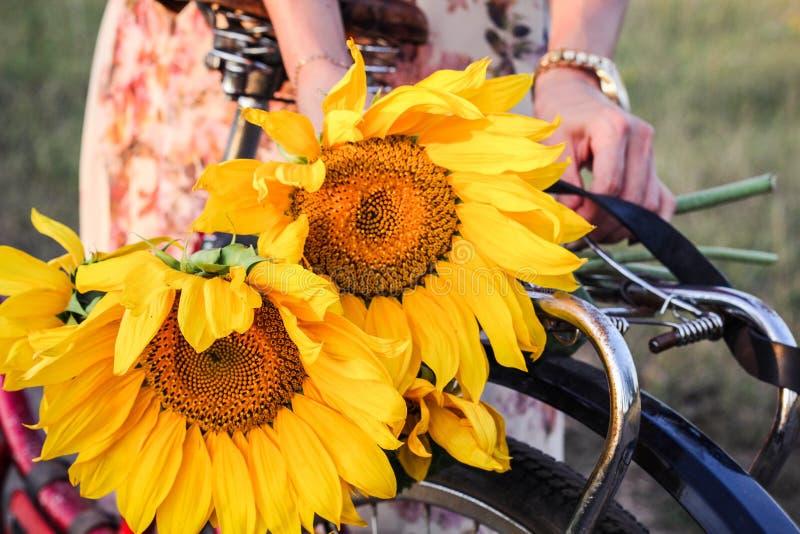 Gele die zonnebloemen aan de boomstam van een fiets worden gebonden royalty-vrije stock fotografie
