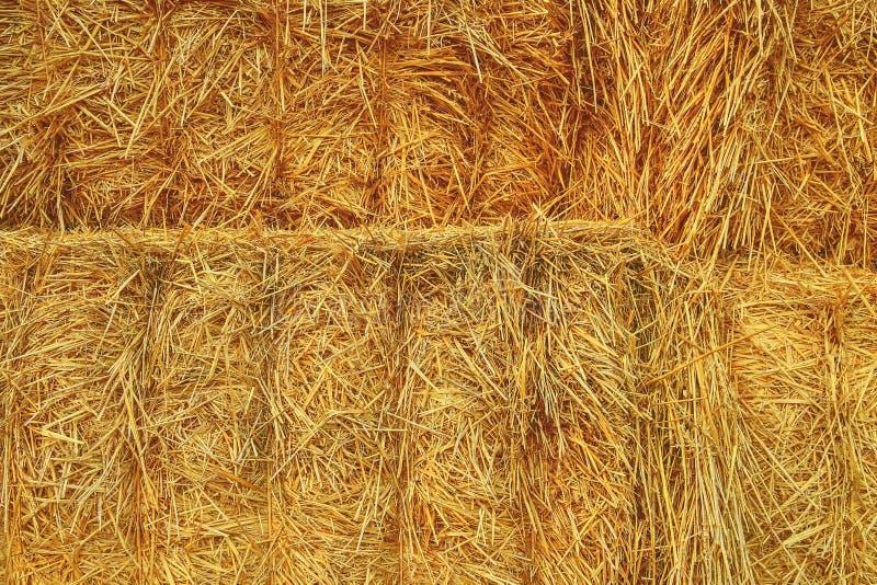 Gele droge hooitextuur als achtergrond Een stapel van de achtergrond van strobalen Close-up Landbouw Concept royalty-vrije stock afbeeldingen