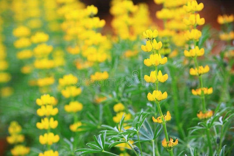 Gele Dull Ice Flowers-close-up stock fotografie