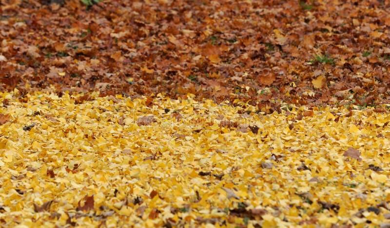 Gele en bruine bladeren ter plaatse royalty-vrije stock afbeeldingen