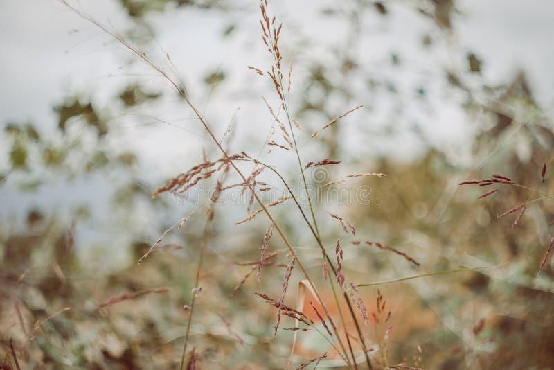 Gele en groene bladeren stock foto's