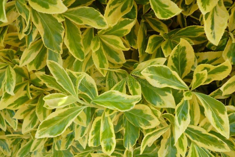 Gele en groene bladeren stock fotografie