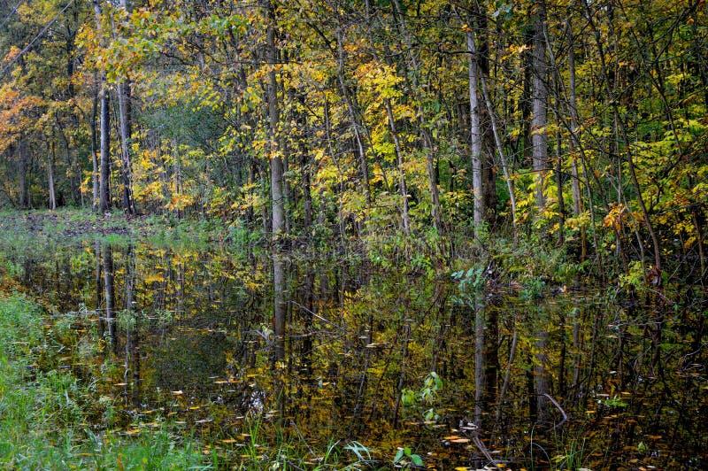 Gele en Groene die Bomen in Water worden weerspiegeld royalty-vrije stock afbeeldingen