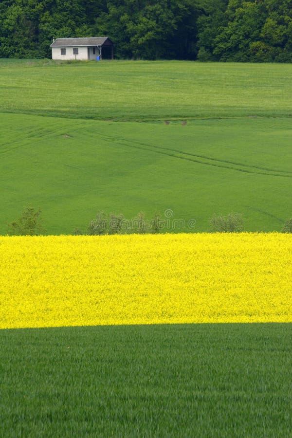 Gele en groene gebieden stock fotografie