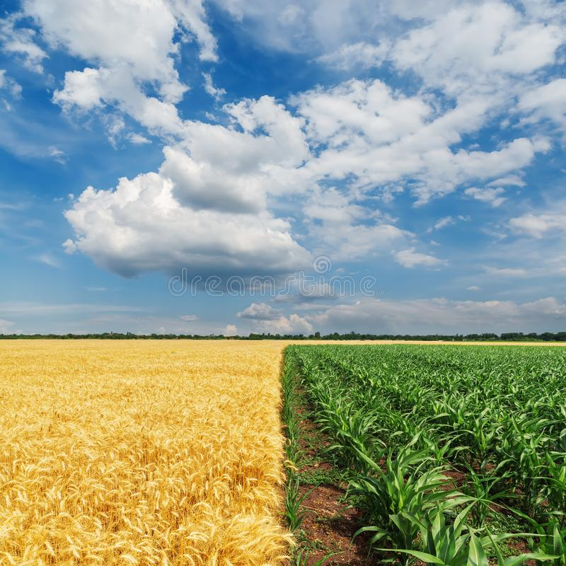 Gele en groene landbouwgebieden en dramatische wolken royalty-vrije stock fotografie