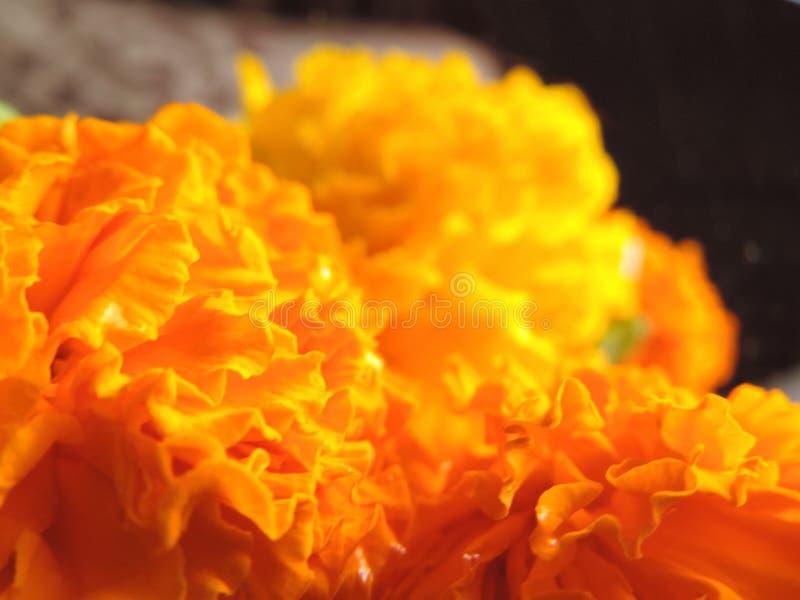 Gele en oranje goudsbloem dichte omhooggaande macro bokeh voor Indisch die festival als slinger en decoratie op een donkere achte stock afbeeldingen