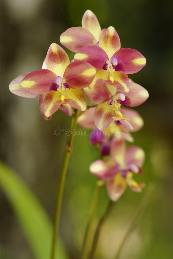 Gele en purpere bloem royalty-vrije stock afbeelding