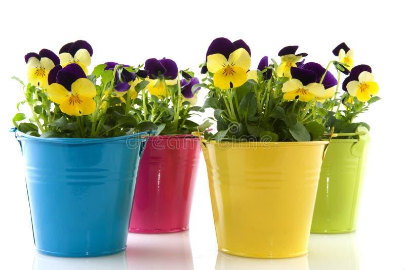 Gele en purpere viooltjes royalty-vrije stock foto