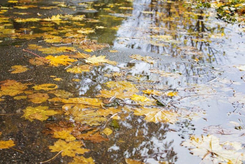 Gele en rode esdoornbladeren in een vulklei onder de regen royalty-vrije stock fotografie