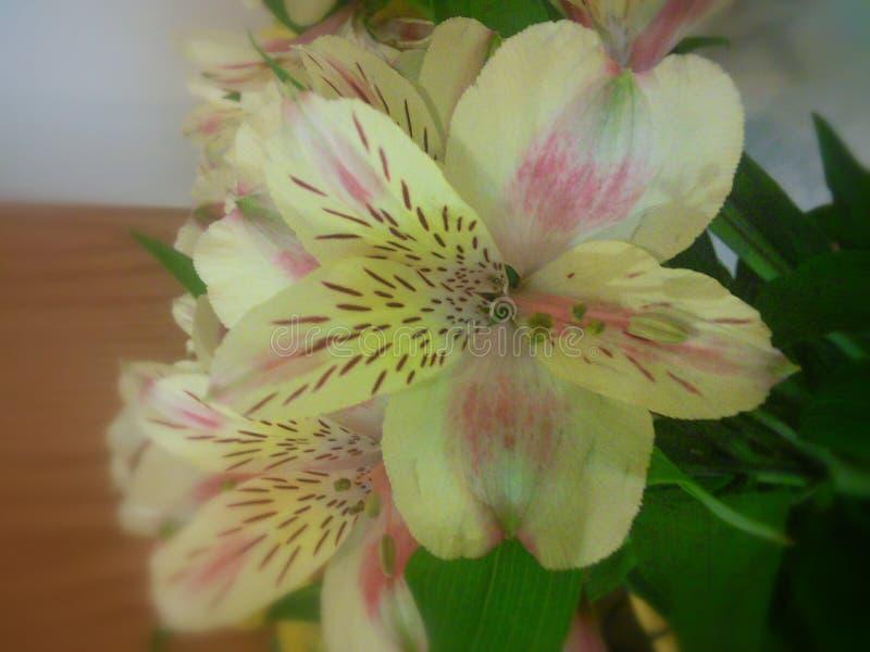 Gele en roze bloemen stock fotografie