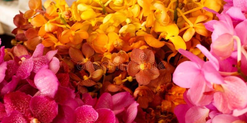 Gele en Roze Orchideeën in de bloemmarkt - achtergrond stock foto's