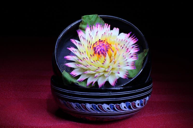 Gele en witte bloem stock foto's