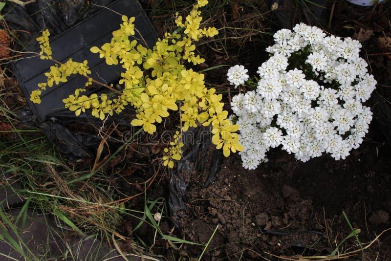 Gele en witte bloemen royalty-vrije stock foto