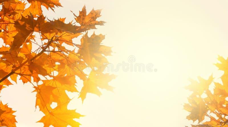 Gele esdoornbladeren op de achtergrond van zonnige de herfsthemel De achtergrond van het de herfstgebladerte De ruimte van het ex royalty-vrije stock fotografie