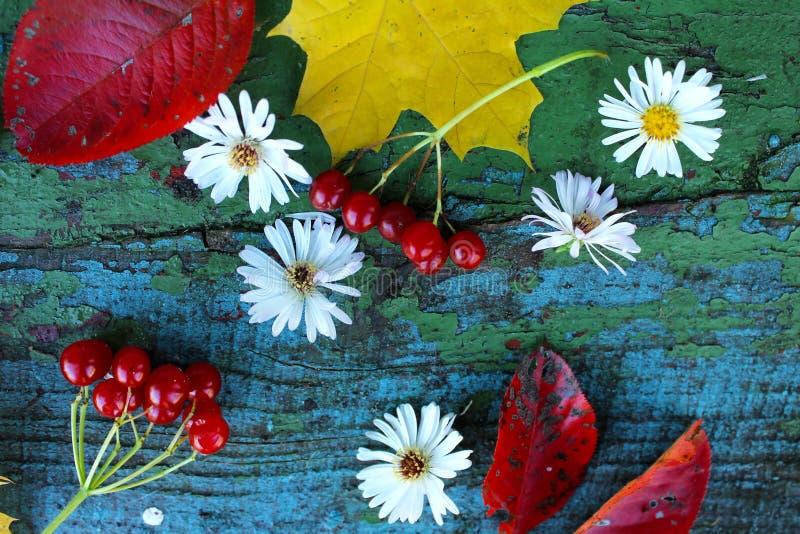 Gele esdoornbladeren, witte bloemen, viburnumbessen en rode bladeren op een oud houten blauw royalty-vrije stock foto's