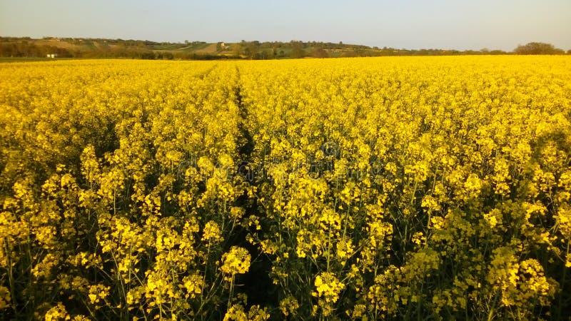 Gele gebieden, landschap stock afbeelding
