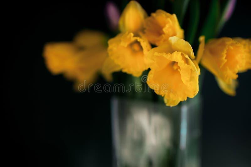Gele gele narcisbloemen met purpere tulp die in vaas met groene muur bloeien stock foto's