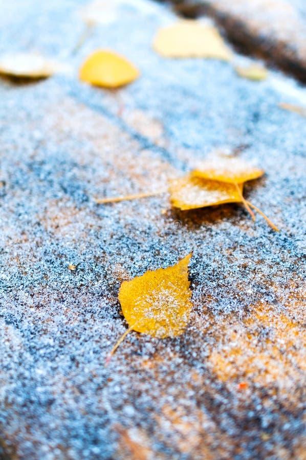 Gele gevallen bladeren op de houten die lijst, met fijne sneeuw wordt behandeld stock fotografie