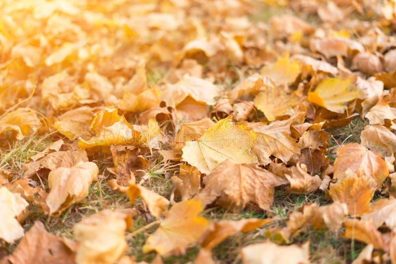 Gele gevallen bladeren op gras royalty-vrije stock foto's