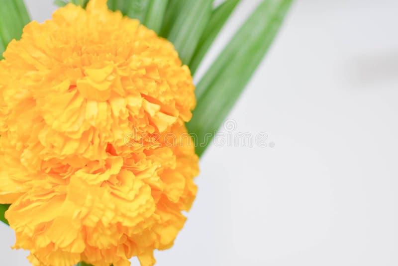 Gele goudsbloembloemen in de tuin stock fotografie