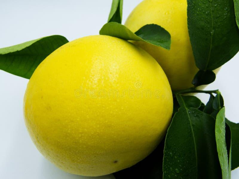 Gele grapefruit stock foto