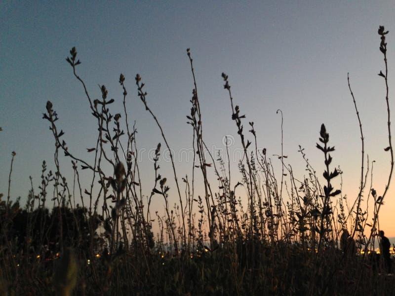 Gele Grassen bij Zonsondergang stock foto