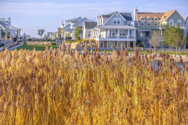 Gele grassen langs Oquirrh-Meer tegen huizen royalty-vrije stock afbeelding
