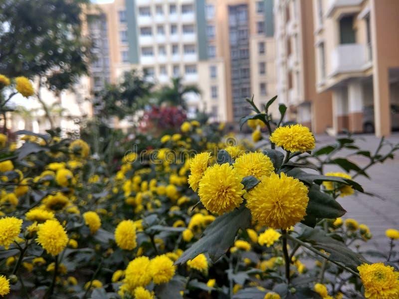 Gele Groepsbloemen royalty-vrije stock foto