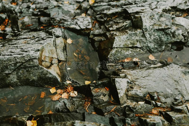 Gele herfstbladeren met druppels water op zwarte natte stenen Achtergrond, achtergrond stock foto's