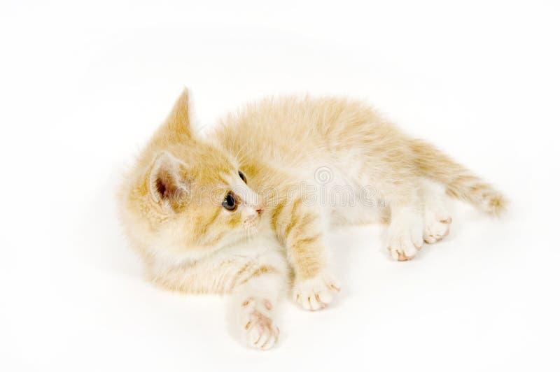 Gele kat die op witte achtergrond rust stock afbeeldingen