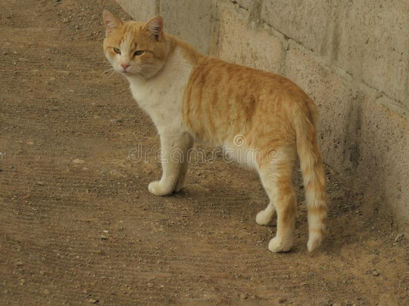 Gele kat naast muur die aan hond in straat meespelen royalty-vrije stock afbeelding