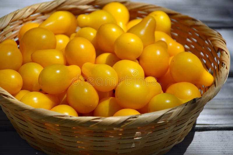 Gele kersentomaten royalty-vrije stock afbeelding