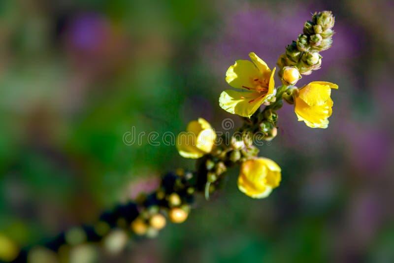 Gele kleine bloemen stock afbeelding